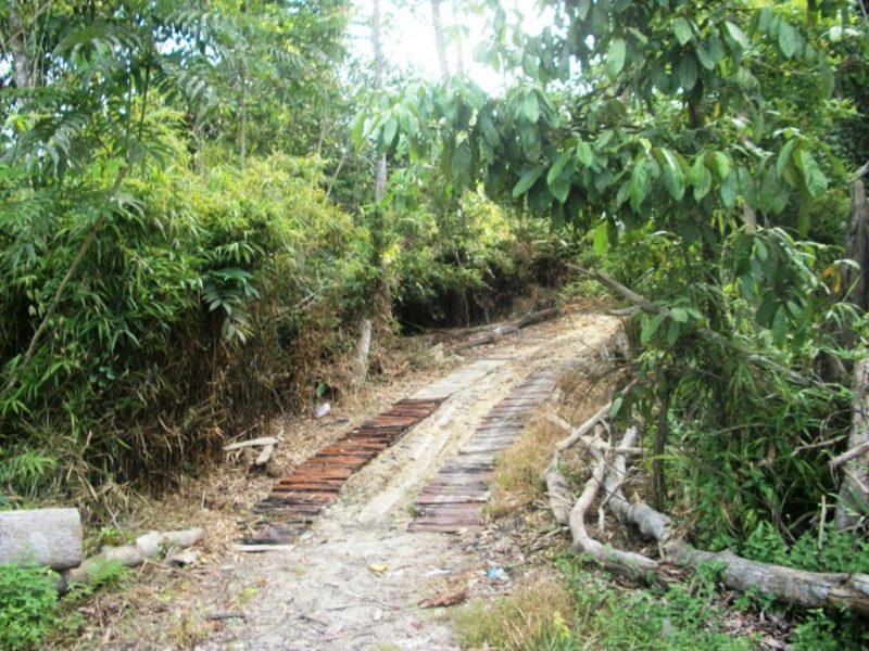 Jejak jalan setapak yang digunakan alat berat memasuki areal Tahura Suharto, dan dapat dilihat di sisi jalan Samarinda-Balikpapan I Dokumentasi Pribadi-gambar diambil 2017