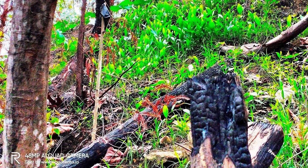 Pembakaran hutan di Tahura Suharto